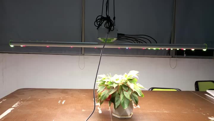 LED Grow Light para plantas de interior