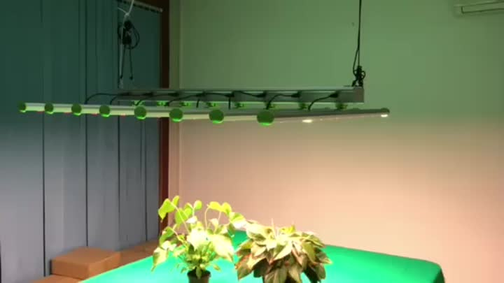 600w led grow light video