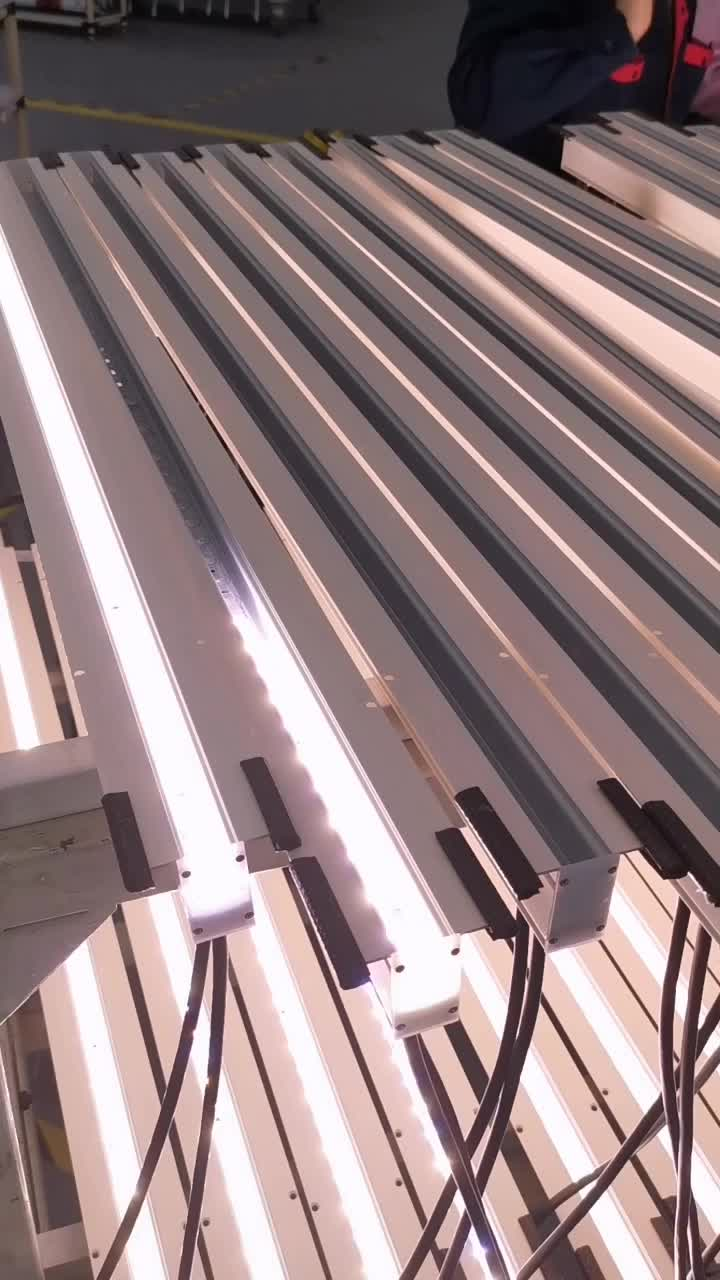Linear Light-1.mp4