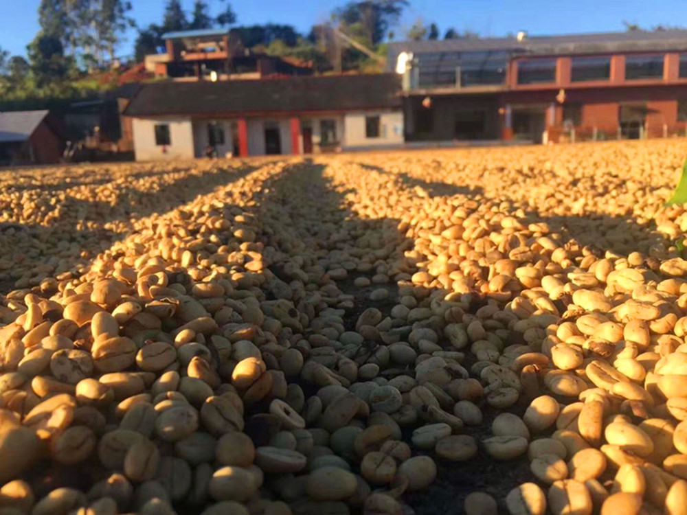 COFFEE BEANS PROCESSING
