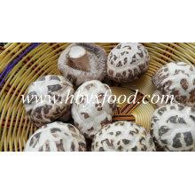 Cogumelos Mágicos de Flor Branca Secos