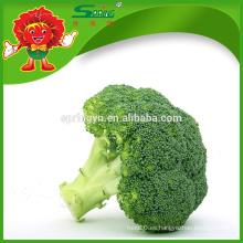 Venta al por mayor de verduras orgánicas IQF brócoli