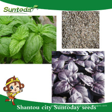 Suntoday азиатских овощей F1 гибридных органических фиолетовый зеленый базилик вода plantting семена(81005)