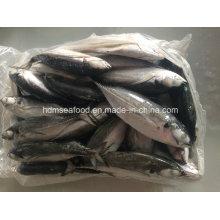 25cm + Hardtail Scad Fish para la venta
