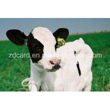 Animal Tag utilizado en la oreja para la gestión