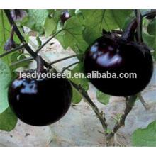 ME16 Heime черная глянцевая кожа круглый баклажан семена для открытого воздуха