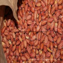Chinesischer Fried Peanut Kernel, gerösteter und gesalzener Erdnusskerne