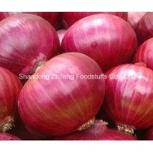 High Quality Fresh 5-7cm Red Onion