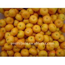 chinese baby mandarin