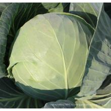 HC53 Яэр теплостойкий,круглый темно-зеленый гибрид F1 капусты семена
