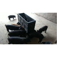 Hot Selling Automatic Plastic Double Side Pig Feeder