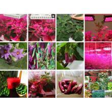 Hydroponics LED Plant Grow Lamp