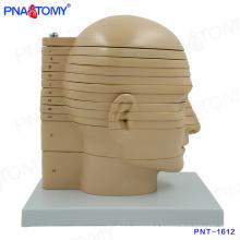 PNT-1612 Life size disc head Brain Anatomical Model