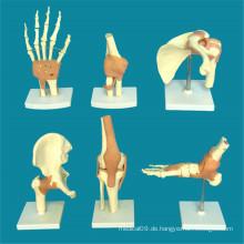 Menschliche Gelenke Anatomie Skeleton Medical Teaching Model (R020903)