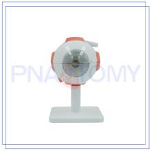 PNT-0661 high quality human eyeball model with