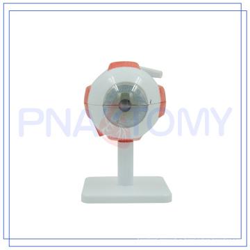 PNT-0661 Enlarged hot sale Human Eye model