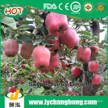 2014 China Fresh Red Apples with Lowest Price
