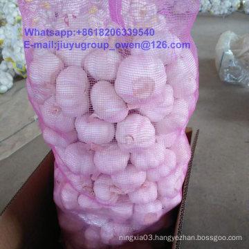 Jinxiang Origin New Crop Fresh White Garlic