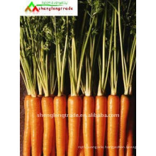 China fresh yellow carrot