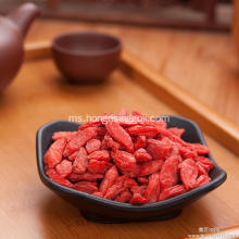 Goji Berry Bush Berry Baik