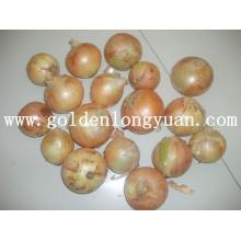 Fresh Vegetable Yellow Onion