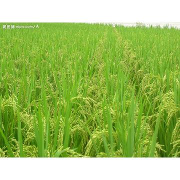 Chélate d'acides aminés de bore de l'agriculture biologique