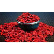 Wolfberry seco de Ningxia