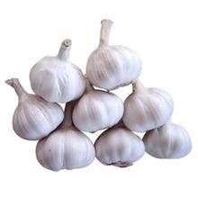 Hot Sale Fresh White Garlic