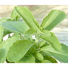 High Quality Steviosides & Rebaudioside a - Stevia