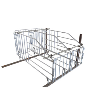 Automático Solid Rod Galvanized Adult Pig Gestation Stall