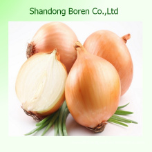 New Crop Chinese Fresh Red Onion