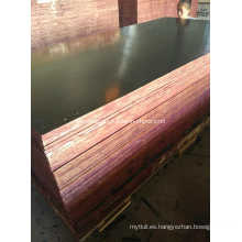 Contrachapado de madera de álamo