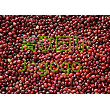 Export New Crop Food Hohe Gute Qiality Rote Bohne