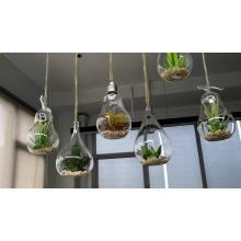Terrario de cristal en forma de lágrima para plantas de aire.