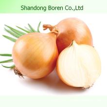 High Quality Fresh Vegetable Onion
