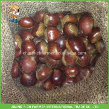 Alta qualidade China Rich Farmer Fresh Chestnut embalado em saco de juta