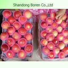 Shandong Köstliche saftige knusprige süße Gala Apfel
