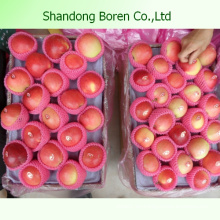 Shandong Deliciosa Juicy Crisp Sweet Gala Apple