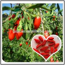 Organische Goji / Fruit Oil Softgel Polysaccharide (UV): Min 20%, Goji-Beere