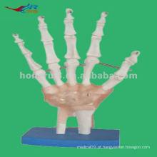 Modelo anatômico modelo de esqueleto de mão, modelo de mão anatômico