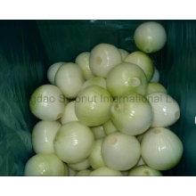 New Crop Fresh Pelled Yellow Onion; Pelled Yellow Onion