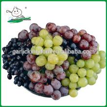 Uvas China / uvas vermelhas / melhores uvas vermelhas frescas