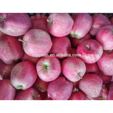 Año 2016 embolsado Red Star Apple de High Land