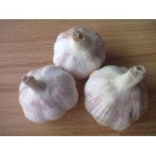 Frischer normaler weißer Knoblauch, 5.0cm und oben, 5kg in 10kg Kartons