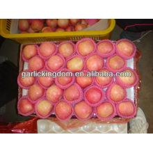 China vermelho preço fresco apple fuji