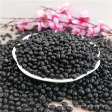 neue Ernte Big Black Beans
