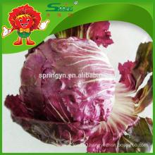 Fresh red lettuce romain iceberg lettuce enterprise