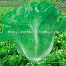 LT06 Huayang high yield green Italian lettuce seeds companies