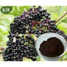 Elderberry Extract Anthocyanidins 3% ~ 25% by UV