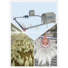 Équipement de ferme de volaille du système d'alimentation de chaîne d'éleveur